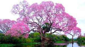 10 stunning trees in the world