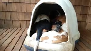 Dog Igloo You Won U0027t Believe How Many Adorable Basset Hounds Are Inside This