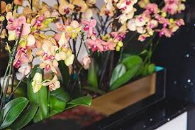 How To Arrange Indoor Plants by Add Colour To Your Apartment Without Painting Compten