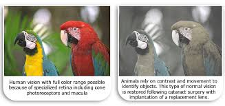 Are All Dogs Colour Blind What Do Dogs And Cats See Veterinary Vision