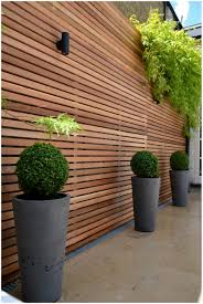 backyards gorgeous privacy trees for small yards strigenz back