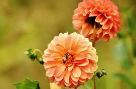 free images blossom petal bloom autumn botany flora