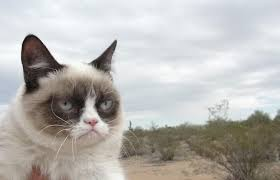 Unamused Cat Meme - grumpy cat has a movie deal and a cat agent complex
