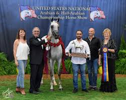 sma magic one byatt arabians international showing stallions