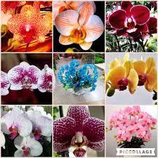 Haus Garten Kaufen Blumensamen Für Hausgarten Phalaenopsis Orchidee Samen Kaufen