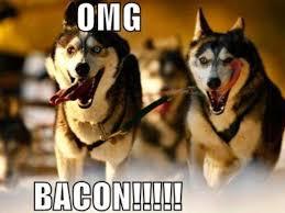 Dog Bacon Meme - pin by janine u p s b a art 93 on huskies pinterest