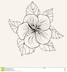 hawaii hibiscus flower leaf for coloring book page for