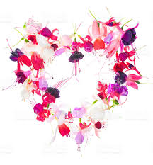 bouquet of valentine heart design colorful fuchsia flowers stock