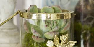 christmas tree alternatives turn houseplants succulents and