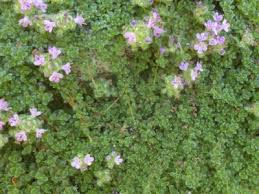 fairy garden plants get in on the miniature landscape craze