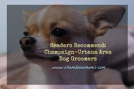 readers recommend champaign urbana area dog groomers