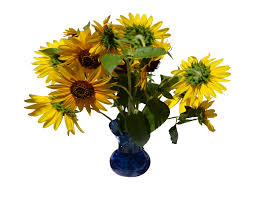 Vase Of Sunflowers Sunflowers In Vase Png Stock 0320 By Annamae22 On Deviantart