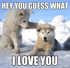 Hey I Love You Meme - hey you guess what i love you caring husky quickmeme