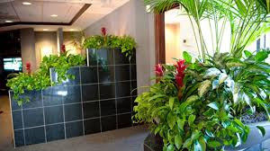 Office Plants by Get Beauty In Office With Office Plants Hire Office Plants