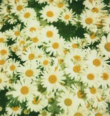 109 best daisies are the happiest flower images on pinterest
