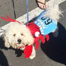 howl o ween dogs and owners don costumes for walk on the bark