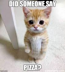 Cute Kitty Memes - did someone say pizza too cute not to share have a great