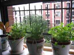 Window Sill Herb Garden by Growing Herbs On Your Windowsill Little Me Big You