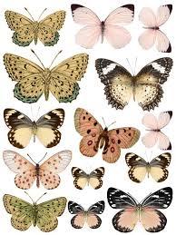 87 best papier motylki images on pinterest butterflies
