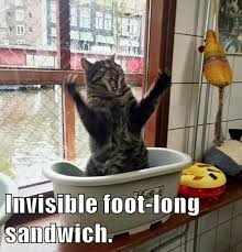 Invisible Cat Meme - i can has cheezburger invisible funny animals online cheezburger