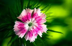 Nice Flowers 14 Name Of Beautiful Flowers White Pink Flower Nice White