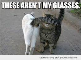 Silly Cat Memes - 9 best cats images on pinterest funny things ha ha and funny