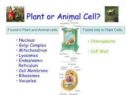 cells the basic units of life ppt video online download