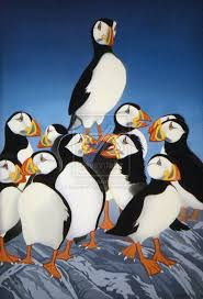 52 best puffins images on pinterest beautiful birds scotland