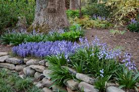 exterior design sweet purple flowers bugleweed for beautiful