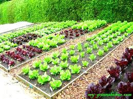 18 basic vegetable garden electrohome info