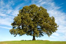 16 amazing stories about trees mental floss