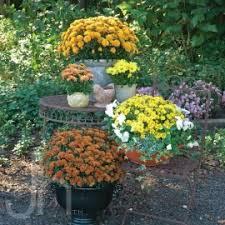 home depot garden club plant search