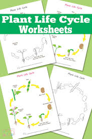 plant life cycle worksheet itsy bitsy fun