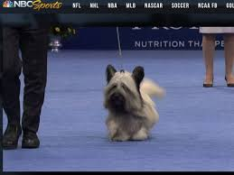 meet the canine who won the national show news entertainment