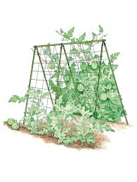 a frame trellis buy from gardener u0027s supply