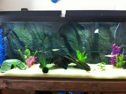 Aquascape Nj Cichlid Forum U2022 How Would You Aquascape This Tank