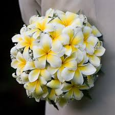 wedding flowers hawaii frangipani flowers for weddings hawaii wedding flowers hawaii