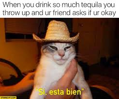 Drunk Cat Meme - when you drink so much tequila you throw up and your friend asks