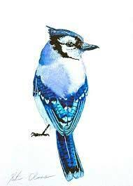 chronic ink tattoo toronto tattoo water color blue jay tattoo