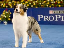 scratchings and sniffings national show presented by purina