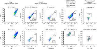 immuno engineered organoids for regulating the kinetics of b cell
