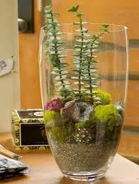 terrarium with plants and grandma u0027s jewels craftfoxes