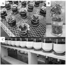 plants free full text advancements in root growth measurement