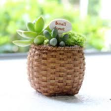 personalized flower pot aliexpress buy hazelnut bamboo cactus pot personalized