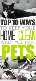 10 pet hair removal hacks that will change your pet hair