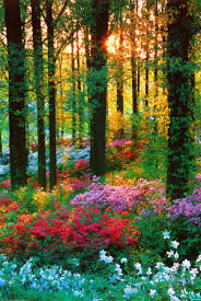 flower forest woodland garden gardens and flowers