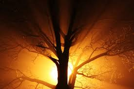 abstract black branch bright mist gold lights nature