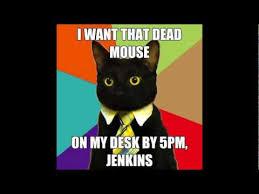 Business Cat Memes - business cat meme compilation youtube