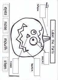 17 life cycle of a pumpkin worksheets kindergarten pumpkin