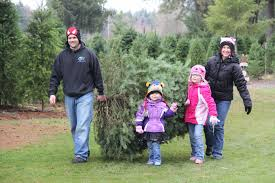 holiday family fun a round up of u cut christmas trees nw kids